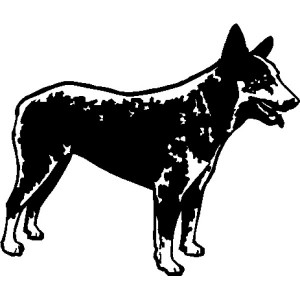 Decal - Blue Heeler - Reverse White