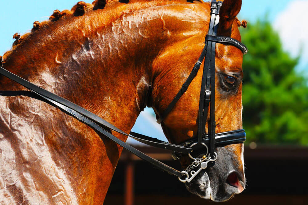 Horse Supplies and Horse Riding Equipment | Horse Gear Outlet
