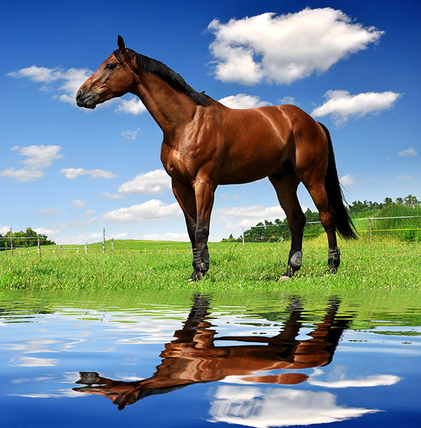 Water and Horses